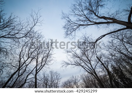 Silhouette of birds, sitting on nude trees