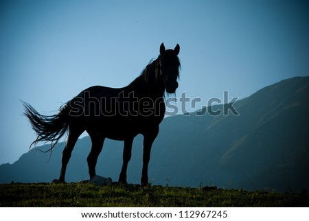 Silhouette of black horse against the mountains