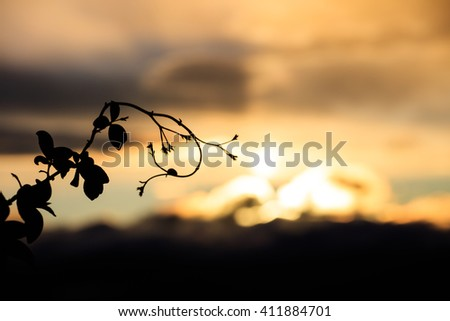 Silhouette of branch against of unfocused skyscape in twilight - stock photo