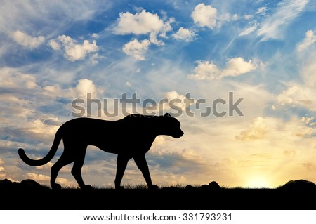 Silhouette of cheetah against the evening sky