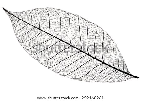 Silhouette of cherry leaf, isolated on white background - stock photo