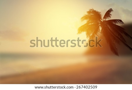 Silhouette of coconut palm tree in caribbean beach at sunset - stock photo