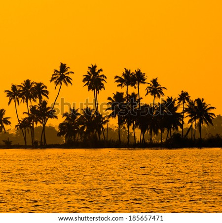silhouette of coconut palm trees at golden tropic sunset, Kerala backwater,  India - stock photo