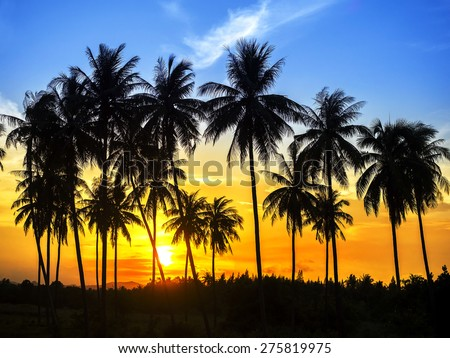 silhouette of coconut palm trees on colorful sun set  - stock photo