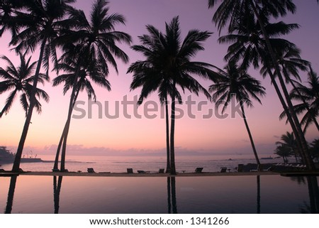 Silhouette of coconut trees at sunrise - stock photo