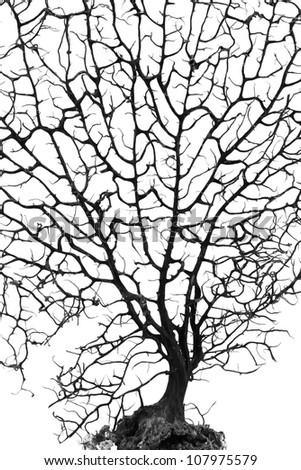 Silhouette of dead bonsai tree on white. - stock photo
