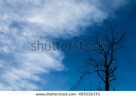 Silhouette of dried tree with blue sky