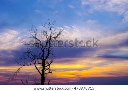 Silhouette of dried tree with dramatic sky
