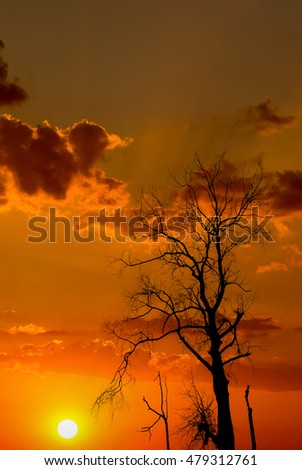 Silhouette of dried tree with sunrise sky
