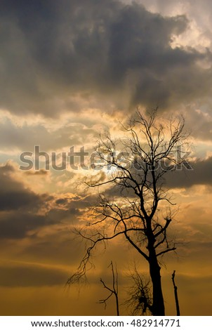 Silhouette of dried tree with sunshine and clouds