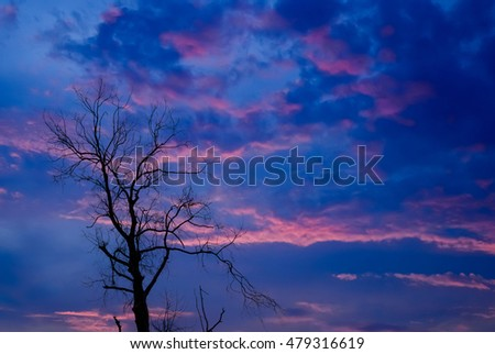 Silhouette of dried tree with twilight and cloudy sky