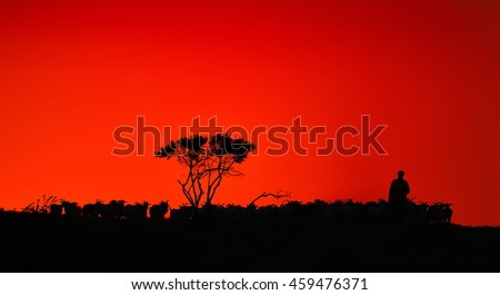 silhouette of flock of sheep at sunset