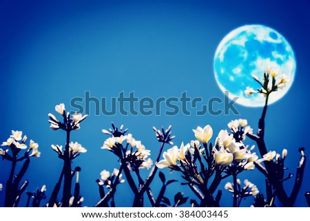 Silhouette of flower and tree on blur Moon background.  - stock photo