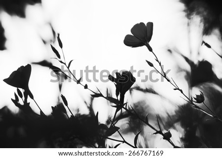 Silhouette of flower. Autumn garden. Beautiful colors. Natural background. Blur. Black and white photo - stock photo