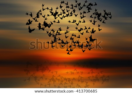 Silhouette of flying birds with natural background, at sunset time.