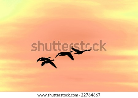 silhouette of four canada geese flying - stock photo