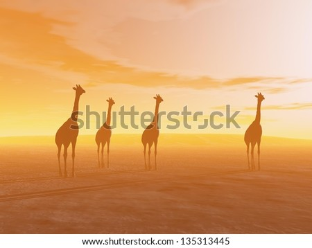 Silhouette of four giraffes standing in the desert by sunset - stock photo