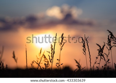 Silhouette of grass at sunset.