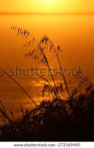 Silhouette of grasses over ocean - stock photo