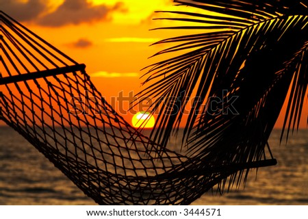 silhouette of hammock and palm leaf  during tropical sunset - stock photo