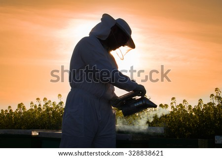 Silhouette of  happy young beekeeper working in the field of yellow flowers on sunset