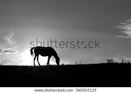 Silhouette of horse grazing on the hill at sunset