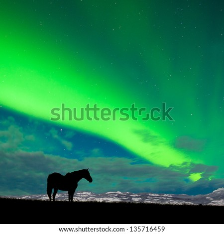 Silhouette of horse on pasture in moon-lit night with distant snowy mountain range and spectacular display of Northern Lights  Aurora borealis  above on starry night sky - stock photo