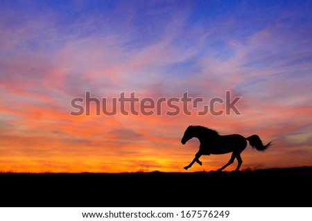 Silhouette of  horse running gallop on sunset background  - stock photo