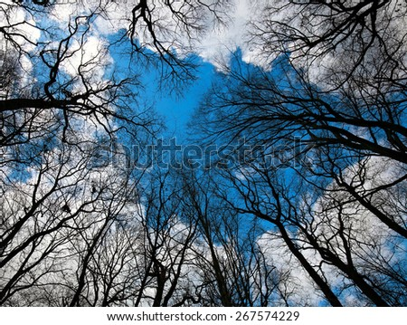 silhouette of leafless trees against the sky - stock photo