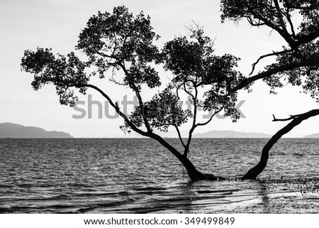 Silhouette of mangrove by the sea in the early morning time, Phuket, Thailand. Black and White tone.