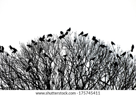 silhouette of many birds on a treetop - black and white shot - stock photo