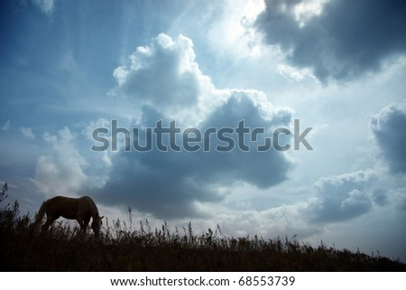 Silhouette of one horse in the steppe during sunset. Natural light and colors. Kazakhstan - stock photo