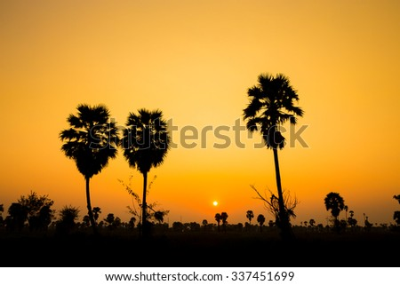 Silhouette of palm colorful evening.