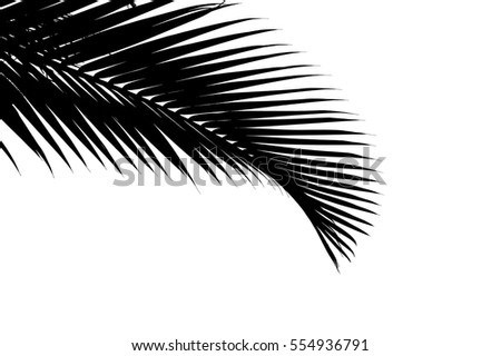 Silhouette of palm leaves isolated on white background