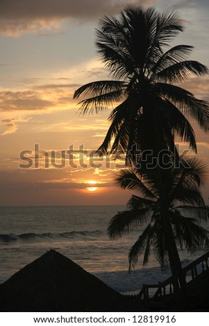 Silhouette of  palm on a famous beach Poneloya. Pacific ocean. Nicaragua - stock photo