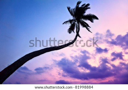 Silhouette of Palm tree at purple sky background in India - stock photo