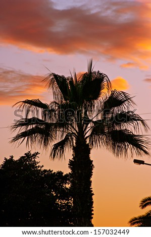 Silhouette of Palm Tree on Sunset Background - stock photo