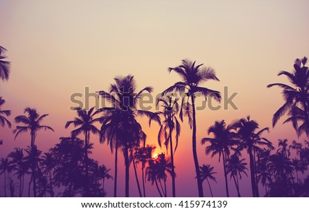 Silhouette of palm trees at sunset, vintage filter