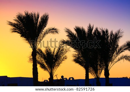 silhouette of palm trees on colorful sky