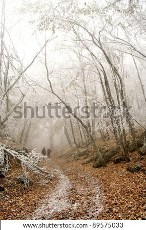 Silhouette of people walking in a winter  road in a foggy forest - stock photo