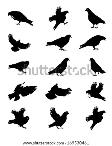 Silhouette of Pigeons Isolated on White  Illustration