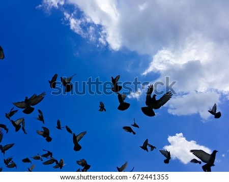 Silhouette of pigeons on the beautiful sky.