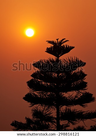 Silhouette of pine tree at sunset with orange sky - stock photo