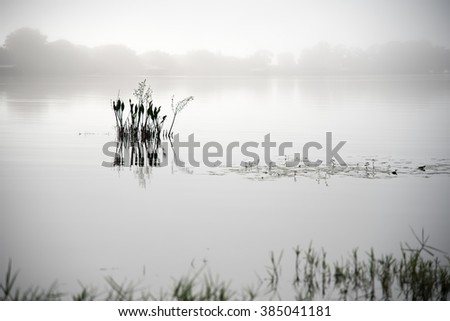 silhouette of Plant in lake with fog