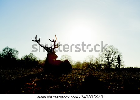 Silhouette of red deer lying in autumnal park in late afternoon light, with two people walking past the background. - stock photo