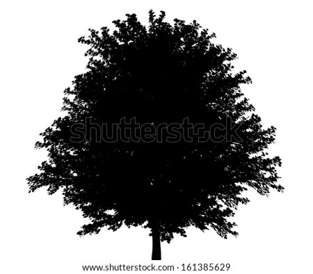 silhouette of red maple tree isolated on white background