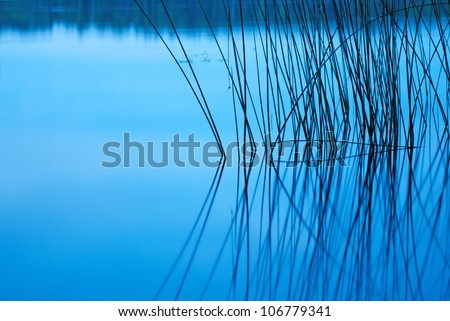 Silhouette of reeds reflected in still lake at night - stock photo