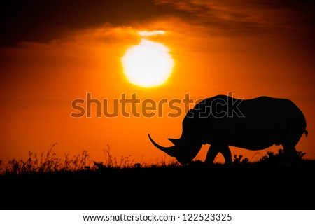 Silhouette of rhino against the African sunset