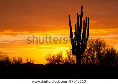 Silhouette of Saguaro Cactus at Sunset - stock photo