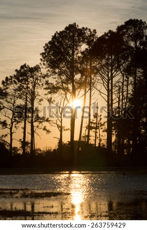 Silhouette of Savanna forest sunset with a lot of trees and bushes - stock photo